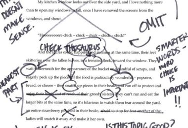 errors found in a student's essay